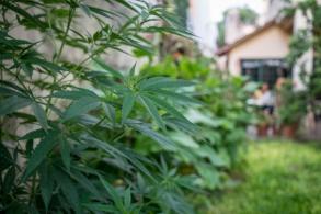 A Buenos Aires pourtant, la consommation et production de cannabis n'est pas légale…