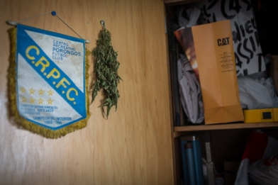 séchage de feuilles de cannabis